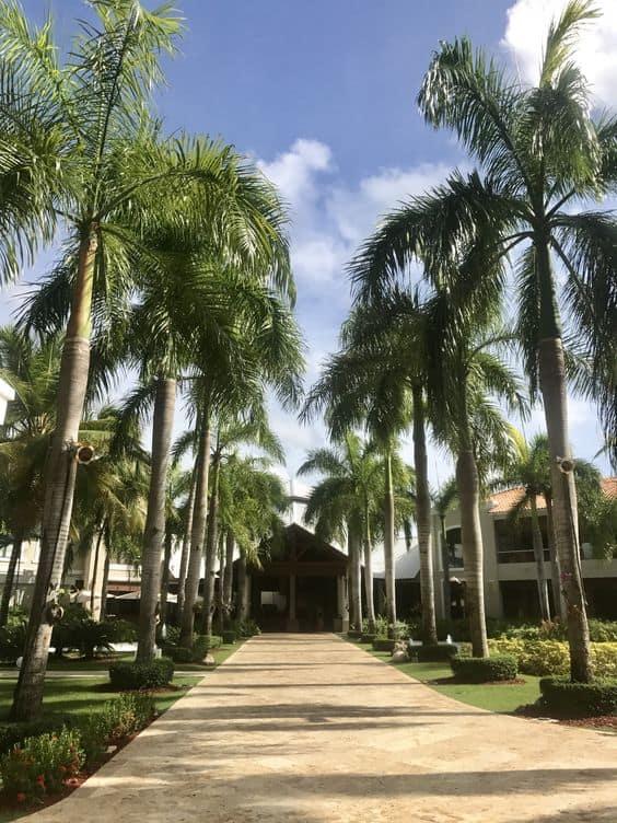 fachadas com Palmeira imperial