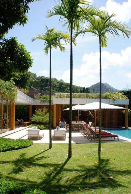 foto de Palmeira imperial 1