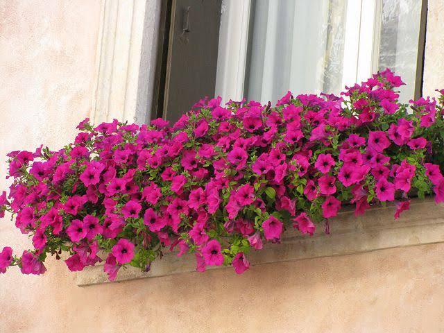 ideia de floreira de janela
