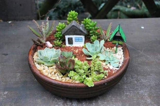 ideias de mini jardim em vaso