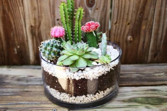 ideias de mini jardim em vidro