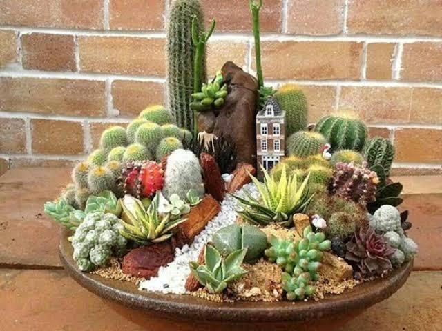 linda ideia de mini jardim de cactos e suculentas