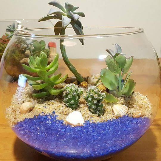 lindo mini jardim em vidro