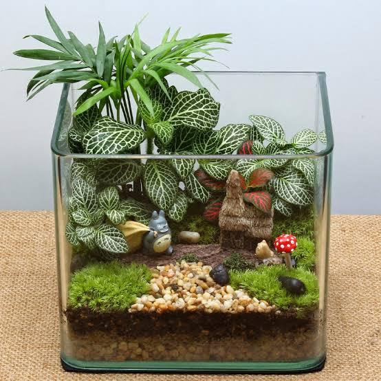 mini jardim em vidro quadrado