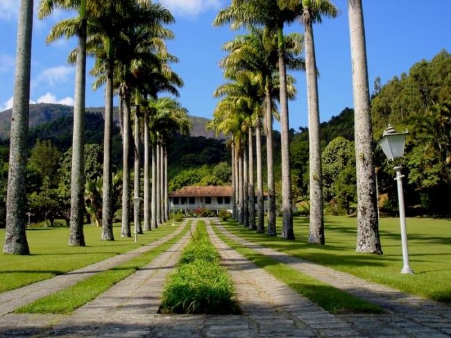 paisagem com Palmeira imperial