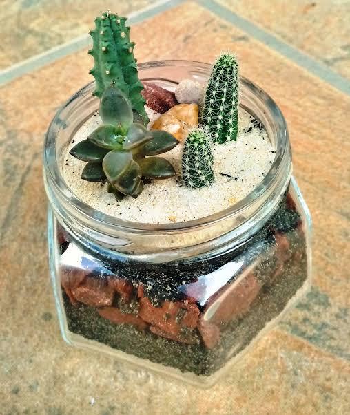 pequeno mini jardim de cactos e suculentas