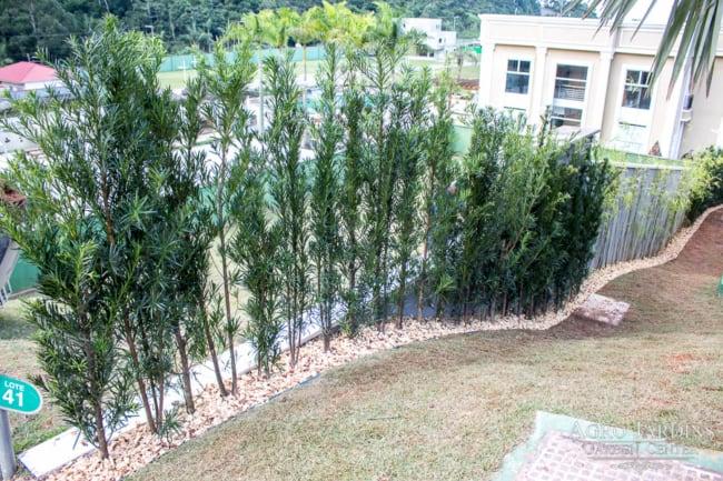 pinheiro e podocarpo em jardim