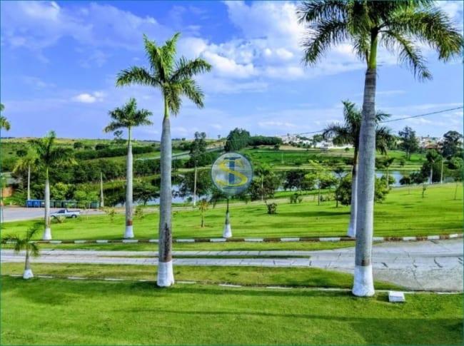 terreno com Palmeira imperial