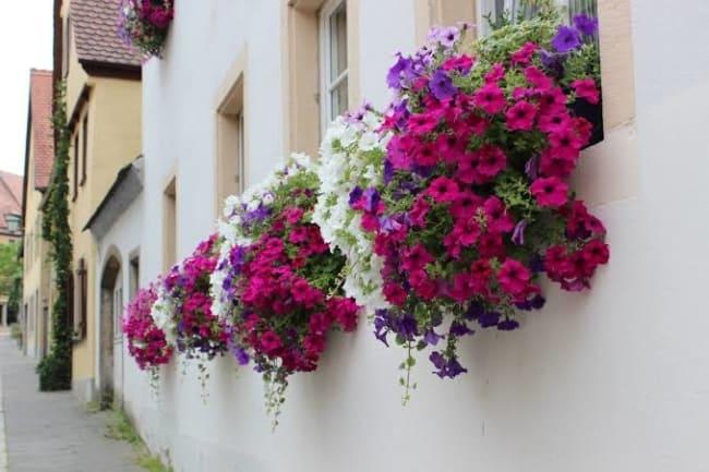 várias floreiras de janela