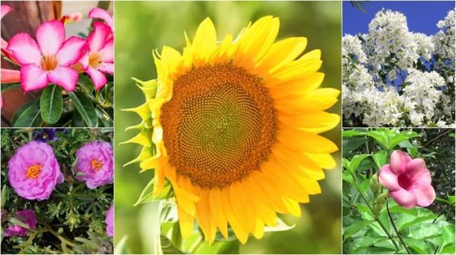 dicas de flores que gostam de sol
