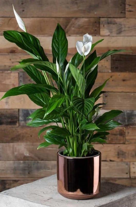 decoração com vaso rosé gold e planta