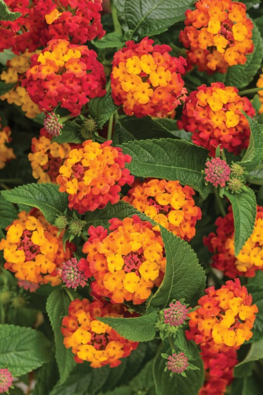 flor pequena e delicada para sol