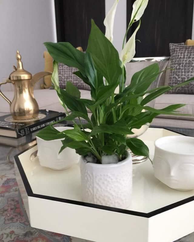 mesa de centro com planta