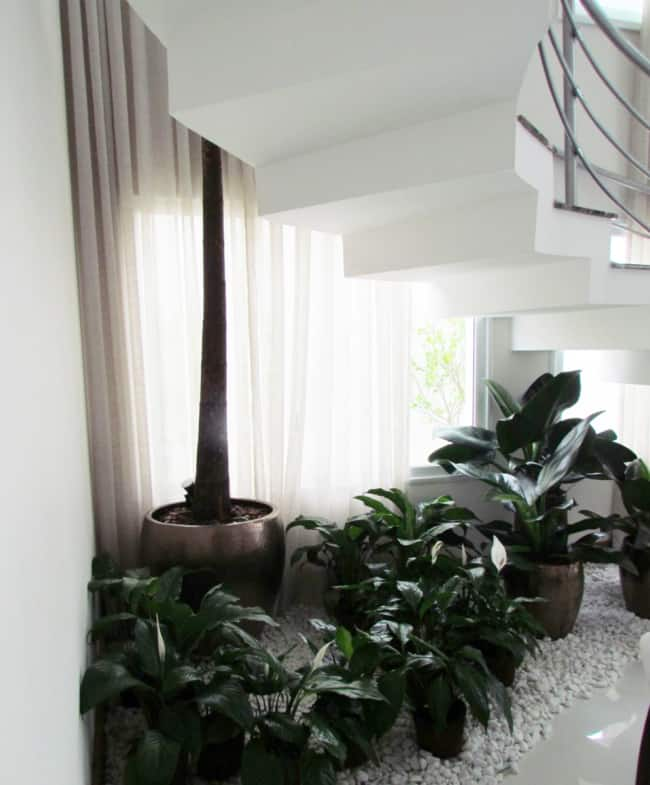 vasos de plantas embaixo da escada