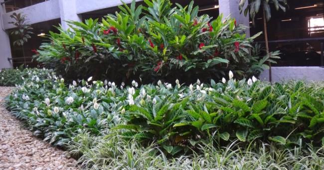 jardim grande com lírio da paz