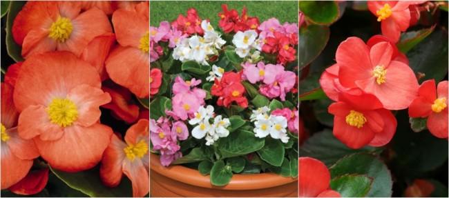 flores para locais com sol