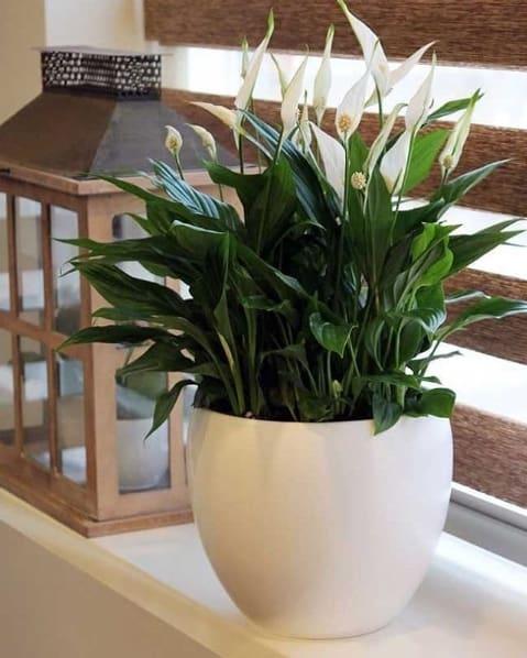 planta com flores para dentro de casa
