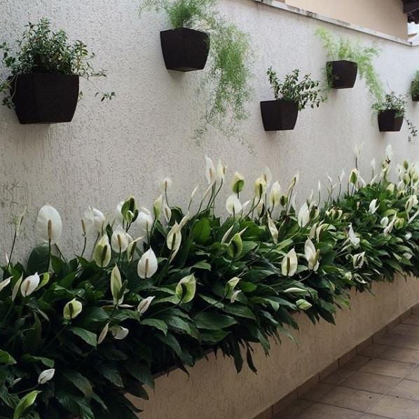 jardim externo com lírios floridos