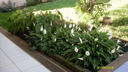 jardim pequeno com lírio da paz