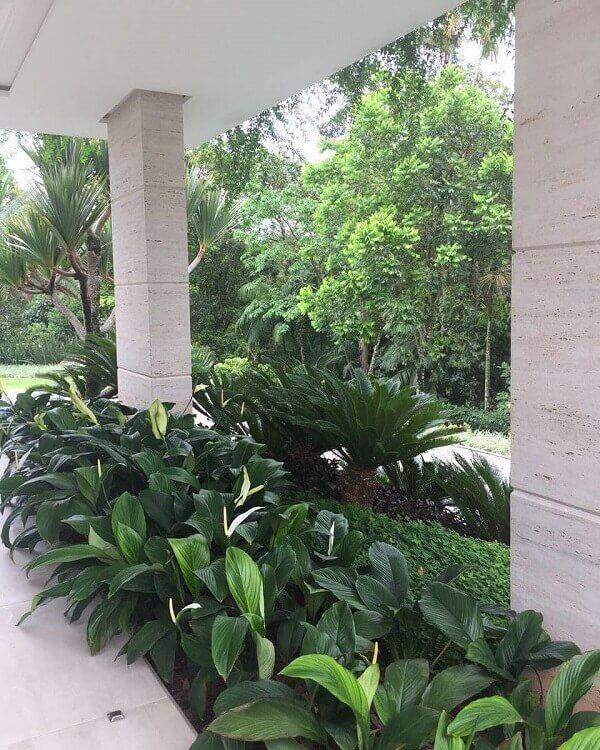 jardim externo com plantas