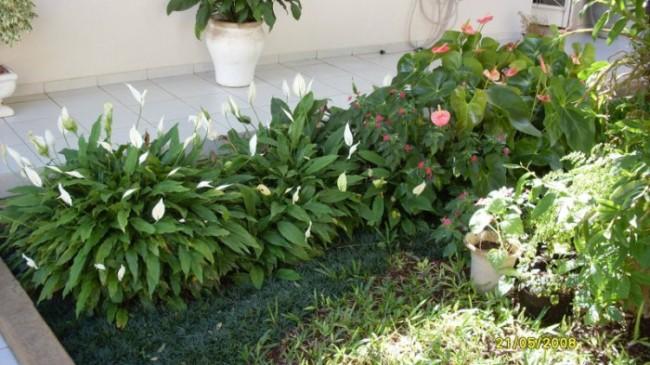 jardim simples com plantas verdes
