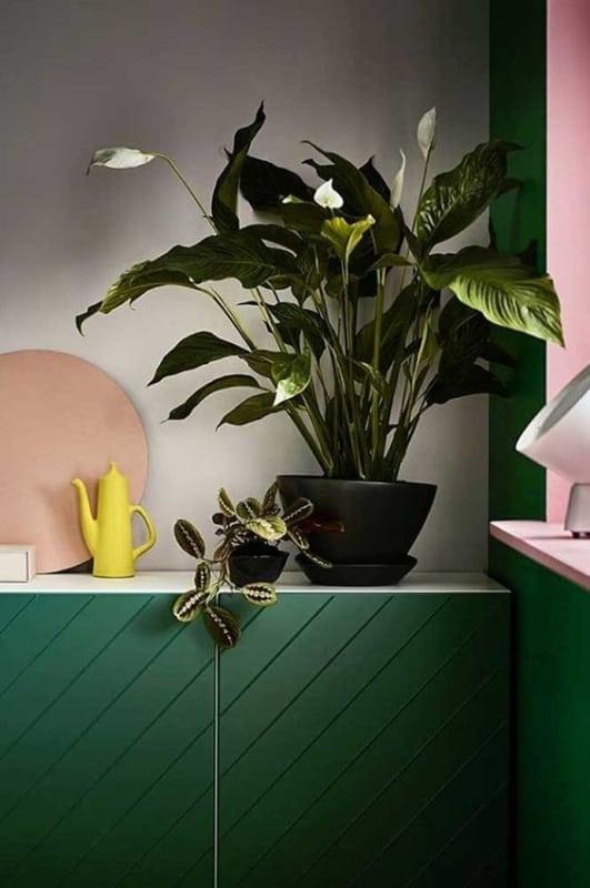 planta de vaso para dentro de casa