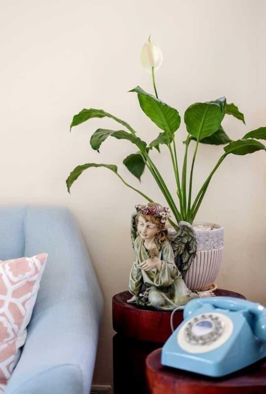 decoração retrô com planta