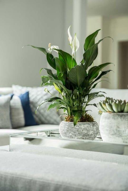 vaso de planta decorando a sala