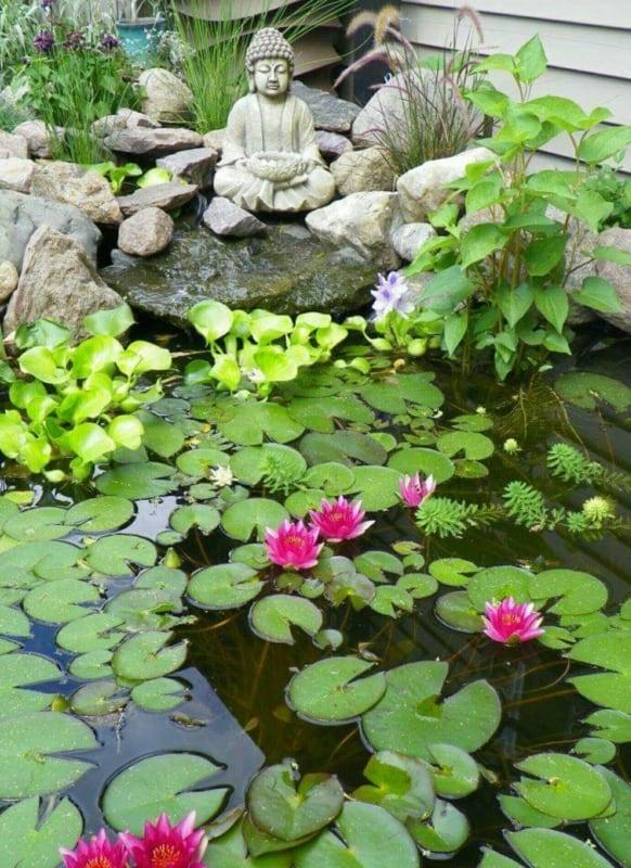 flor de lótus em jardim japonês