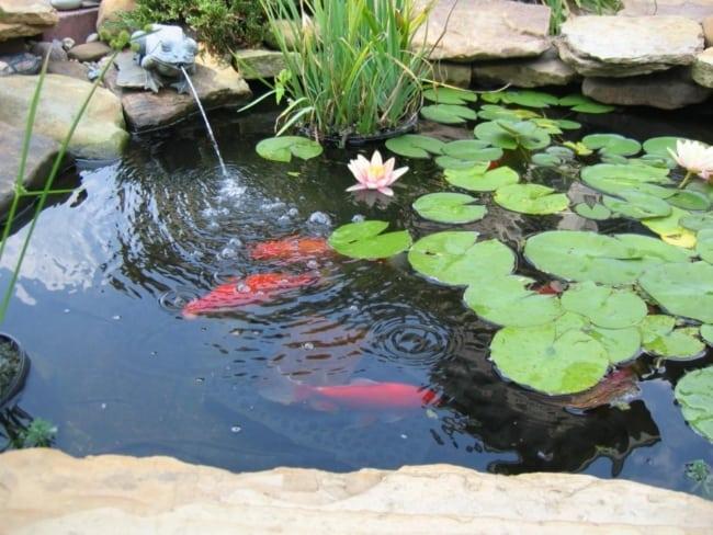 flor de lótus lagos