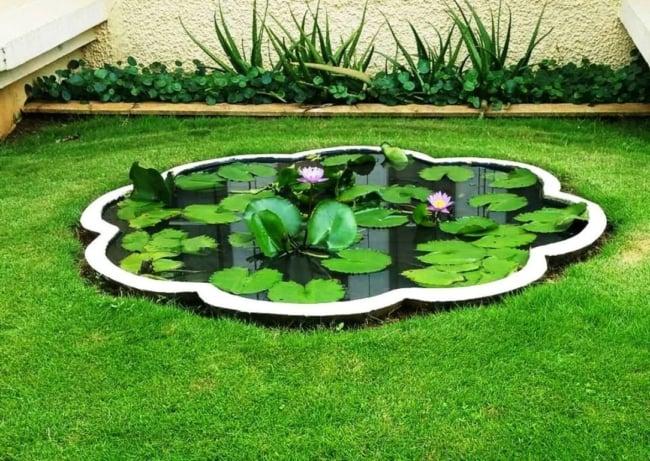 lago com flor de lótus
