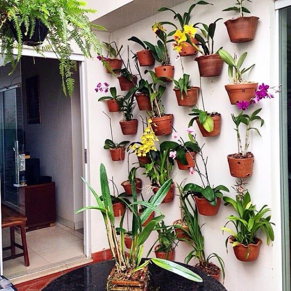 parede com vasos de orquídeas