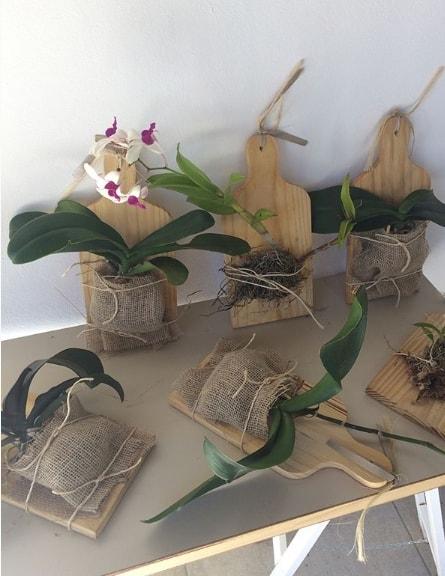 ideia criativa para orquídeas