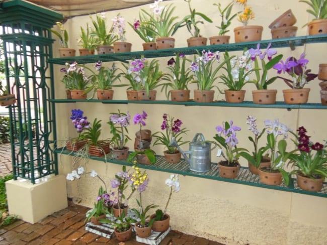 prateleiras com orquídeas