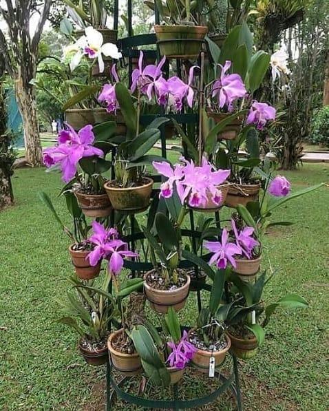 jardim com orquidário vertical