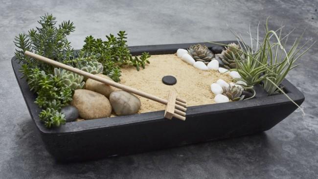 mini jardim zen com suculentas