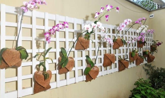 mini orquidário de parede
