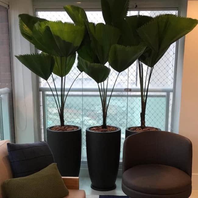 Apartamento com vasos de palmeiras leque