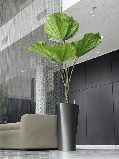 Casa moderna com palmeira leque