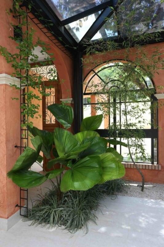Complete o paisagismo com uma linda palmeira leque
