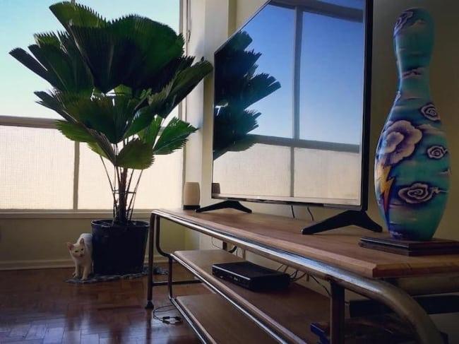 Decoração da sala de estar com palmeira leque