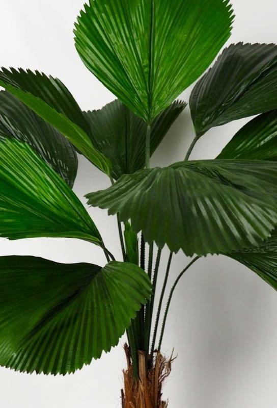 Detalhe das folhas das palmeiras leque