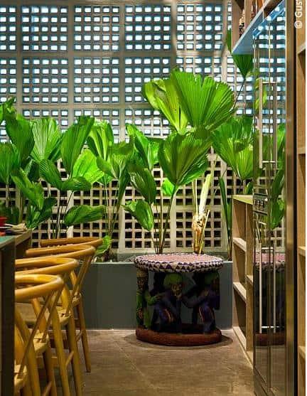 Jardim interno na cozinha com palmeira leque