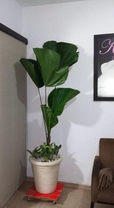 Palmeira leque no canto na sala