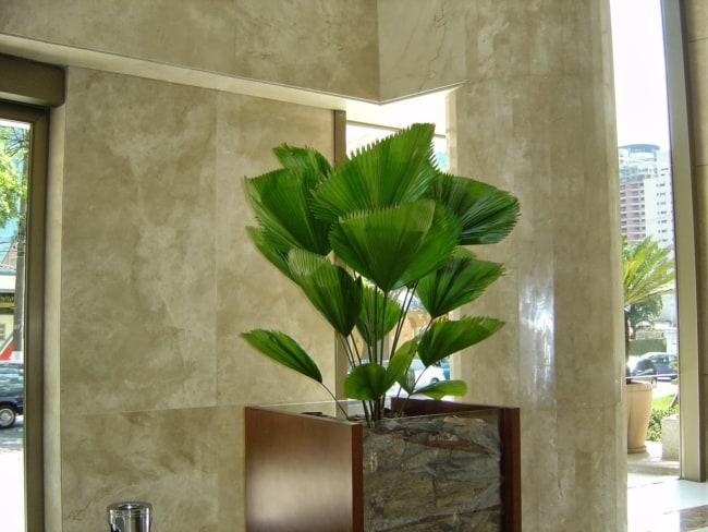 Uso da palmeira no saguão de prédios