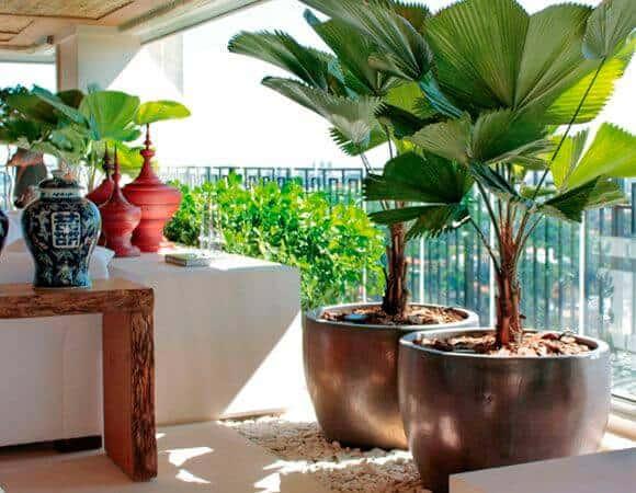 Varanda de apartamento com palmeira leque