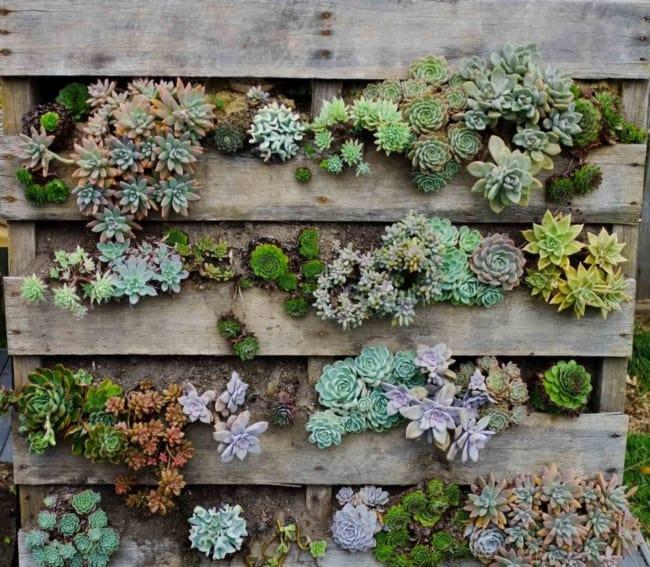 Floreira de paletes para parede com suculentas20