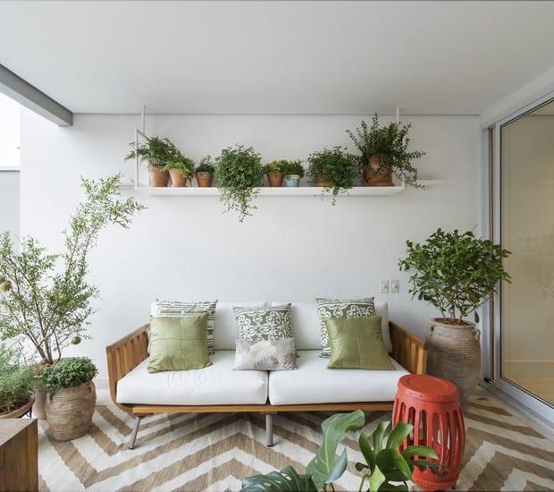 clusia na varanda de apartamento