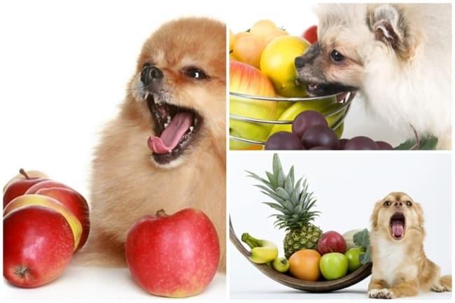 dicas para dar frutas para cachorro