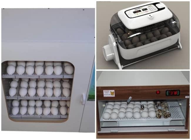 tamanhos de chocadeira de ovo
